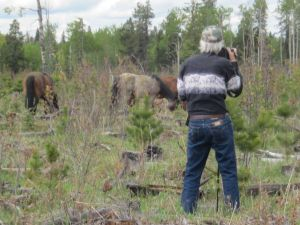 Ken McLeod photographing the wild horses of Alberta.
