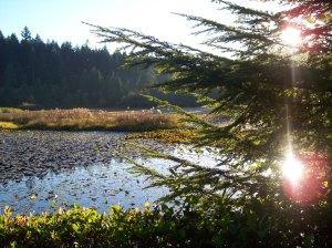 Beaver Lake, Stanley Park photo credit: Bobanny