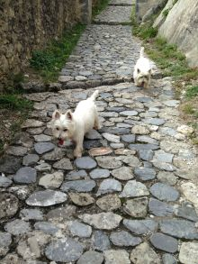 Cruising up the path to La Citadelle d'Entrevaux
