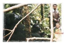 db and gorilla