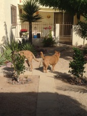The dogs inspecting the shared court yard