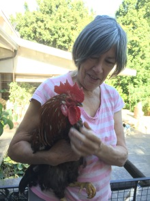 Stephanie and the dreaded rooster about to be released from his night box