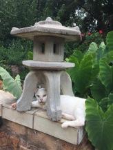 Tri-pod, the 18 year old 3 legged cat